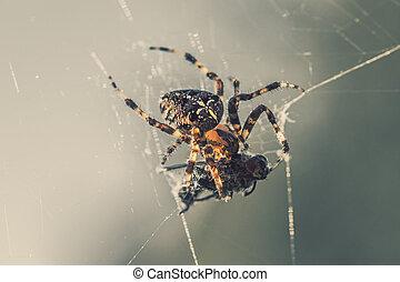 kříž, pavučina, kořist, min.čas i příč.min. od catch, pavouk