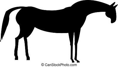 kůň, čerň, běloba grafické pozadí