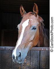 kůň, closeup