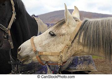kůň, hlavička, closeup