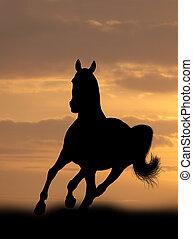kůň, východ slunce