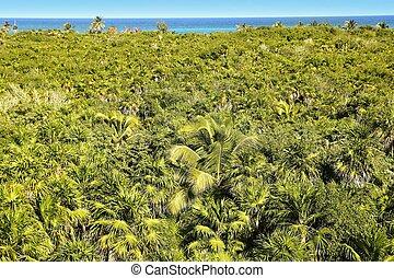 kaan, strom, obrazný, dlaň, džungle, tulum, sian