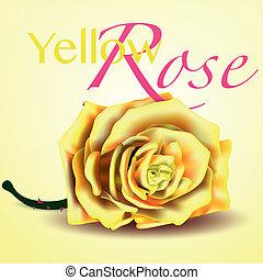 kaart, met, gele, vector, roos, op achtergrond