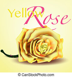 kaart, roos,  Vector, achtergrond, gele