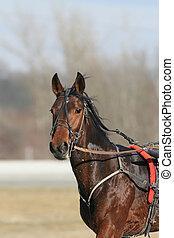 kabelstrang- laufen, pferd