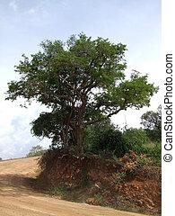 Kabwoya Wildlife Reserve scenery - scenery in the Kabwoya ...