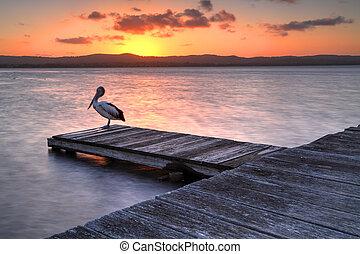 kade, australië, ondergaande zon , lang, nsw