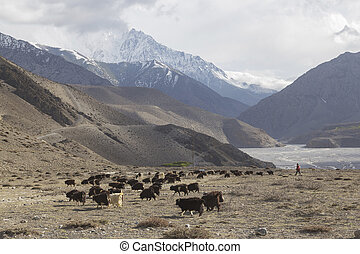Kagbeni city in lower Mustang district, Nepal