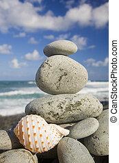 kagyló, által, a, tengerpart