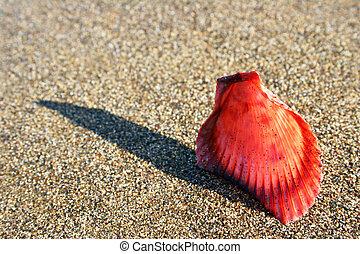kagyló, képben látható, homok