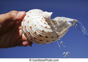kagyló, víz