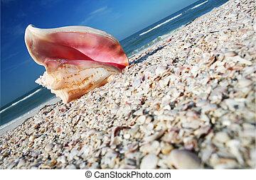 kagylóhéj, part