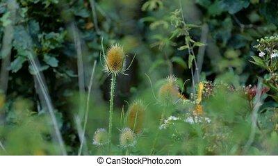 kaisermantel, papillon, -, argynnis, paphia, -, closeup, slowmo