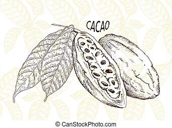 kakaó, bab, csokoládé