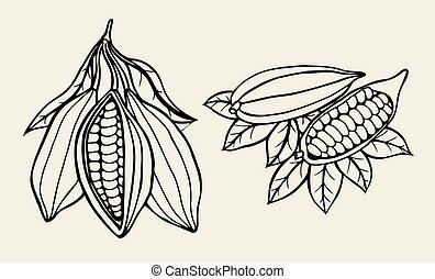 kakaó, bab, illustration.