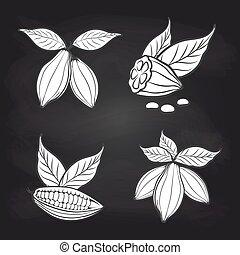 kakaó, tábla, zöld, bab