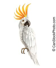 kakadu, barwny, papuga, realistyczny, wektor, ptak, 3d