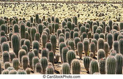 sonnenlicht warm closeup kaktus geldstrafe arten. Black Bedroom Furniture Sets. Home Design Ideas
