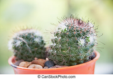 kaktus, ind, solnedgang, lys