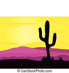 kaktus, zachód słońca, pustynia, meksyk