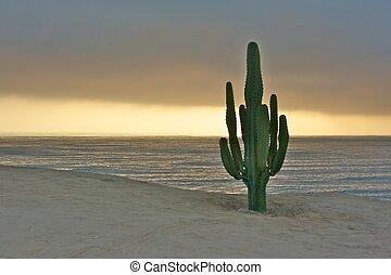 kaktusz, csendes-óceán