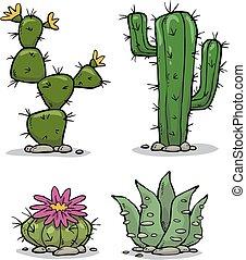 kaktusz, gyűjtés