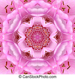 kaléidoscope, rose, centre, concentrique, fleur, mandala