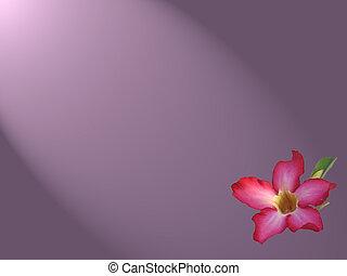 Kalachuchi Wallpaper - A flowered wallpaper design