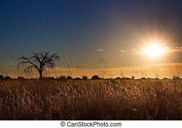 kalahati, coucher soleil, à, arbres, herbe, bleu, ciel