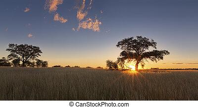kalahati, solnedgang, hos, træer, græs, og blå, himmel