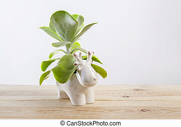 Kalanchoe thyrsiflora succulent pot plant with green, thick, rounded, paddle-shaped leaves.