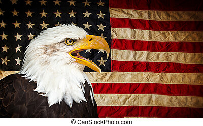 kale adelaar, met, amerikaan, flag.