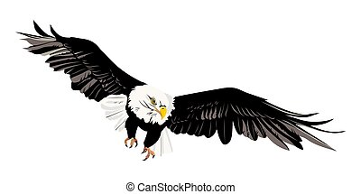 kale adelaar