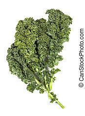Kale Isolated - Kale leaves isolated on white background.