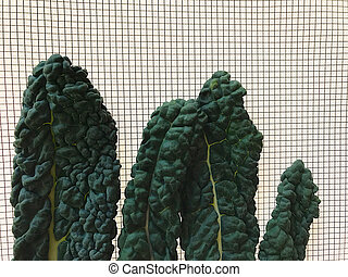 Kale on graphing paper