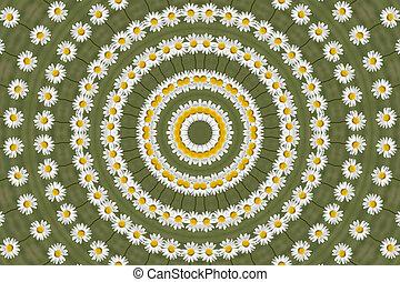 Kaleidoscopic Daisy - Kaleidoscopic Shasta Daisy in growing...