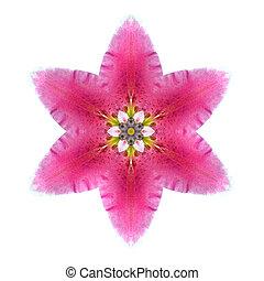 Kaleidoscopic Lily Flower Mandala Isolated on White