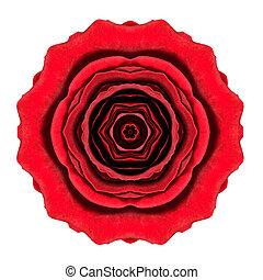 Kaleidoscopic Red Rose Flower Mandala Isolated on White