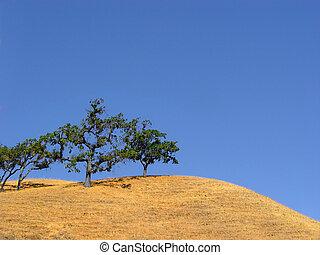 kalifornien, hügel