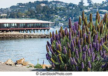 kalifornien, lila busch