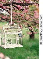 kalitka, sakura, madár