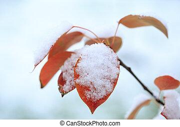 kall, vinter