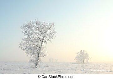 kall, vinter träd, hos, gryning