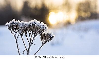 kalte,  warm, Sonnenuntergang,  Winter