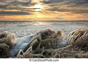 kalte , winter, sonnenaufgang, landschaftsbild, mit, schilfgras, bedeckt, in, eis