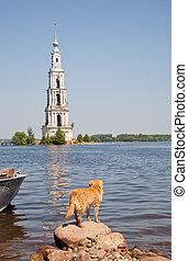 kalyazin, inundado, volga, belltower, río, rusia