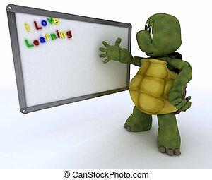 kamer, plank, teken, drywipe, witte , stand, schildpad
