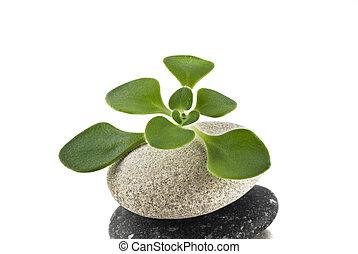 kamień, -, życie, zielony, plan, zrównoważony, wieża, kamyk