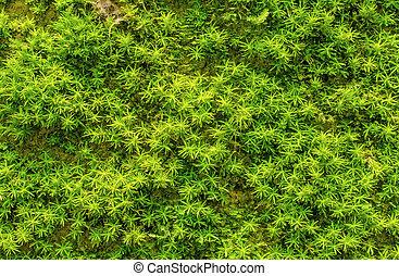 kamień, zielony, zarosły, mech, las