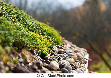 kamienie, żyjący, szczegół, dach, zielony, pokryty, obszerny, roślinność